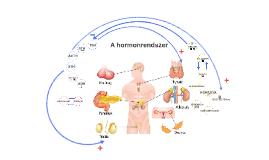 A hormonrendszer