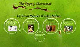 The Pygmy Marmoset