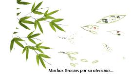 Poaceae - Bambusoide