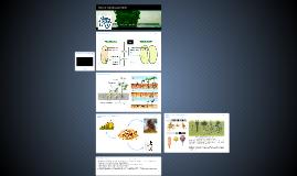 БИО-6. Урок 6. Семя , его строение и значение