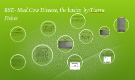 BSE- Mad Cow Disease, the basics