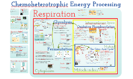 Cellular Respiration, Aerobic and Anaerobic Respiration