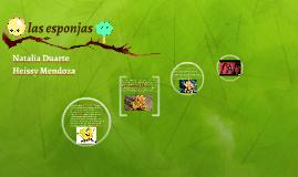 Copy of Las esponjas o poríferos (Porifera) son un filo de animales