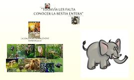 safari estrategico