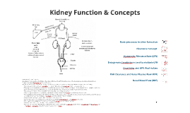 Ch.4 Renal Function