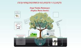 Copy of ciclo biogeoquimico del silicio y el calcio