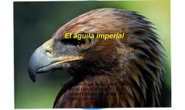 El águila imperial en biologia