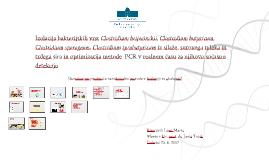 Izolacija bakterijskih vrst Clostridium beijerinckii, Cl. Bu