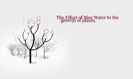 The Effect of Rice Water to the