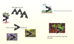 Nitirogen Cycle