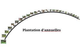 Plantation d'annuelles