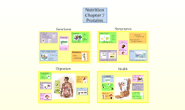 Nutrition Chapter 7 Proteins Biology 1325 Jason Carlson