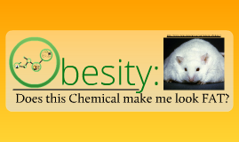 Do These Chemicals Make Me Look Fat?