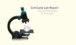 Cell Cycle Lab Report