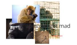 wild apes