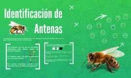 Identificación de Antenas
