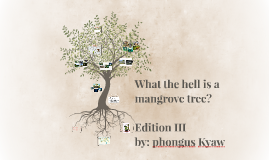 What the hell is a mangrove tree?