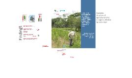 Copy of Estructura económica de las unidades productoras agropecuarias en zonas de influencia de cultivos de coca. Fase II