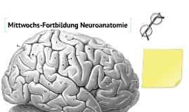 neuroanat nchkssg