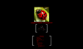 Copy of Ladybird Beetle Investigation