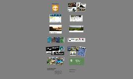 Organizational Report: Timberland, LLC