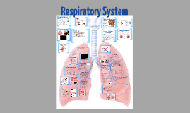 EHAP Chapter 12 The Respiratory System