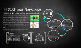 Copy of Sistema Nervioso