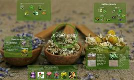Kultūriniai augalai