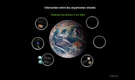 Copy of Adaptation des animaux à leurs milieux