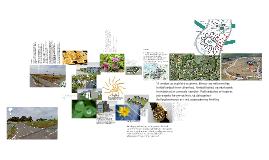 Copy of Svalin - præsentation