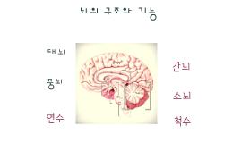 뇌의구조와 기능
