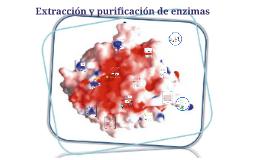 Extracción y purificación de enzimas