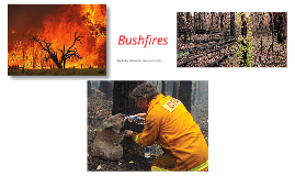 Copy of Bush fires
