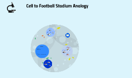Cell to Football Stadium Analogy