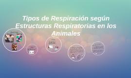 Copy of Tipos de Respiración según Estructuras Respiratorias eb los