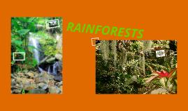 Copy of Rainforests