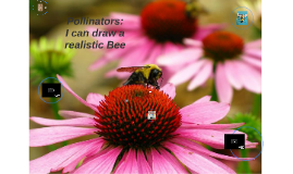 Bees : Drawing nature's pollinator