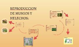REPRODUCCION DE MUSGOS Y HELECHOS:
