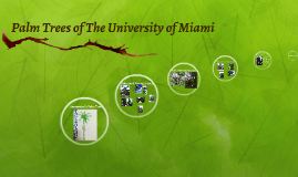 Palm Trees of The University of Miami