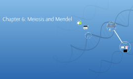 Chapter 6: Meiosis and Mendel