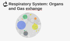 Respiratory System: Organs and Gas exhange