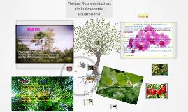 Copy of PLANTAS REPRESENTATIVAS DE LA REGUION AMAZONICA