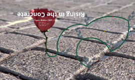 Copy of The Rose in the Concrete