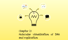 Chapter 15: DNA replication