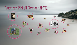 American Pitbull Terrier (APBT).