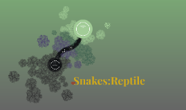 Snakes:Reptile