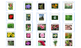 Plants Identification
