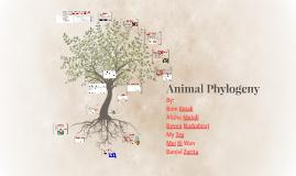 Animal Phylogeny
