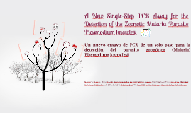 A New Single-Step PCR Assay for the Detection of the