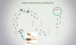 Impacto Ambiental Sobre el Cepillo de Pelo